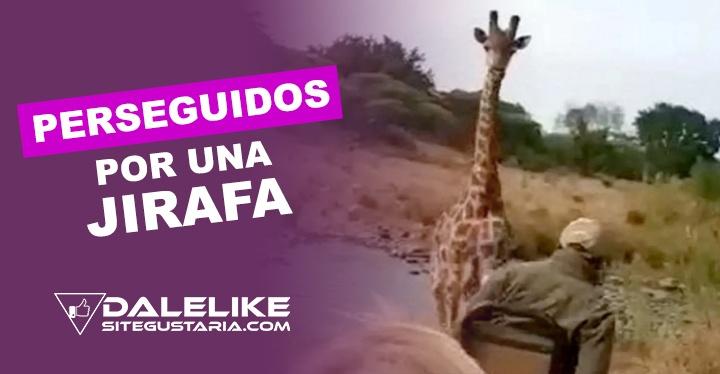 En video: Jirafa enojada persigue a turistas que disfrutaban de un tranquilo Safari