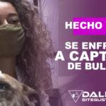 En video: Mujer se lanza sobre un coche en marcha para evitar el robo de un perro